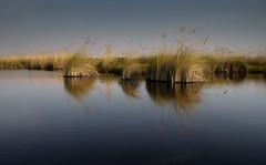 20090902 Okavango - Moremi 189 (blogmulo) Tags: africa camp naturaleza nature canon wildlife reserve delta safari botswana moremi okavango canon450d blogmulo okuti