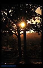 Great Moment (Karina Belle) Tags: trees light sunset pordosol sun folhas luz sol nature leaves silhouette landscape natureza creative paisagem atardeceres silueta moment arvores fimdetarde nikond60 creativemoment karinabelle