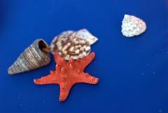 Sea life (x-dragos) Tags: blue sea shells star romania blacksea mamaia nikond60