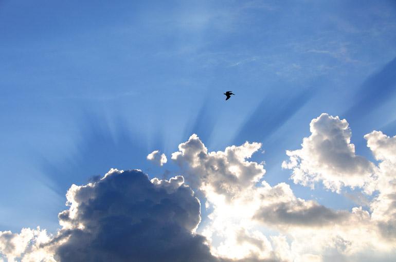 web_sunsetearl_pelicanblue_0206_2884