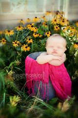 .welcome. (*miss*leah*) Tags: pink flowers sleeping baby flower yellow bucket nikon babygirl newborn blackeyedsusan backporch sapbucket newbornphotography nikond700 leahhoskins