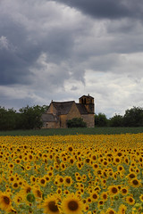 Sunflowers in Dordogne (Stephen Laverack) Tags: flowers france flower clouds dordogne sunflowers cenac vezac laverack