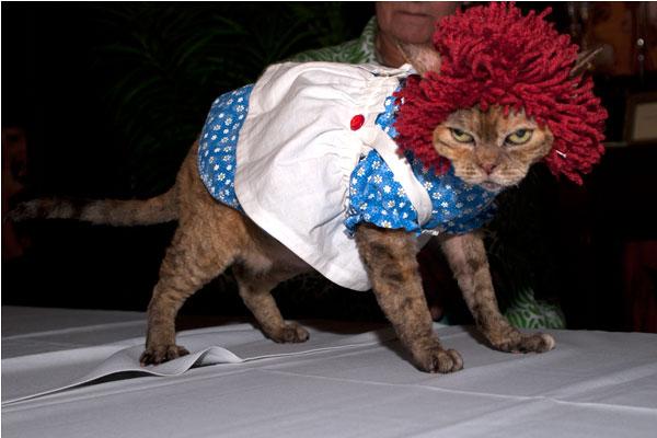 fashioncat2