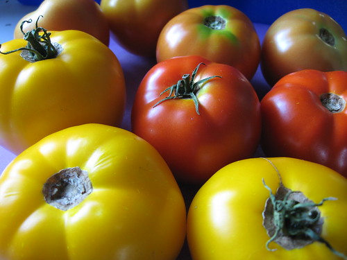 Tomatoes - August 23, 2010