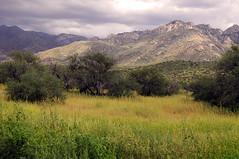 Landscape, Catalina State Park, Arizona
