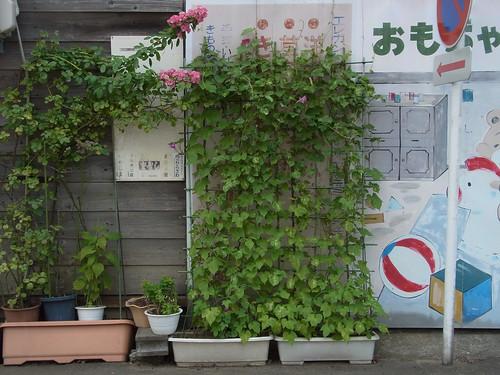 糸魚川 2