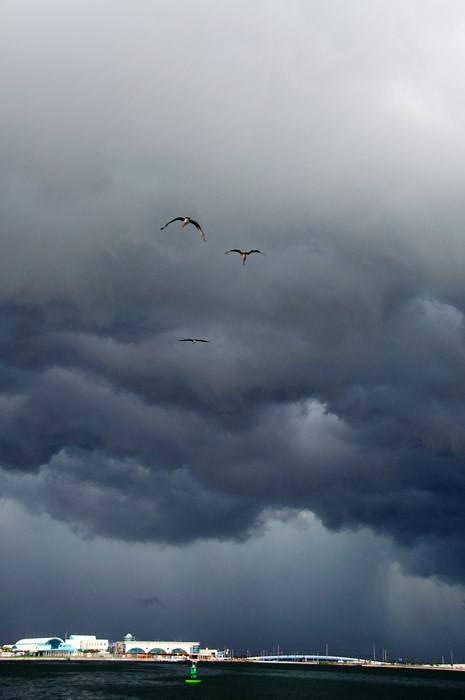 web_stormportcanaveral_birds_0022_2893