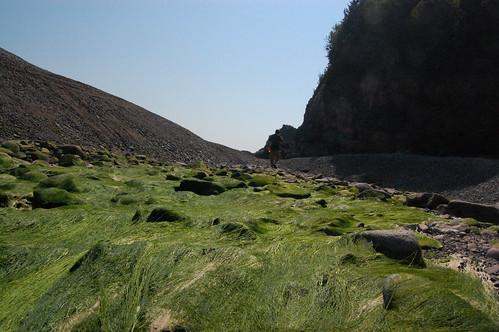 Cape Chignecto (267)