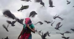 birds (nandadevieast) Tags: travel woman india birds gujarat dwarka anuragagnihotri nandadevieast dwarkadham gomtighat