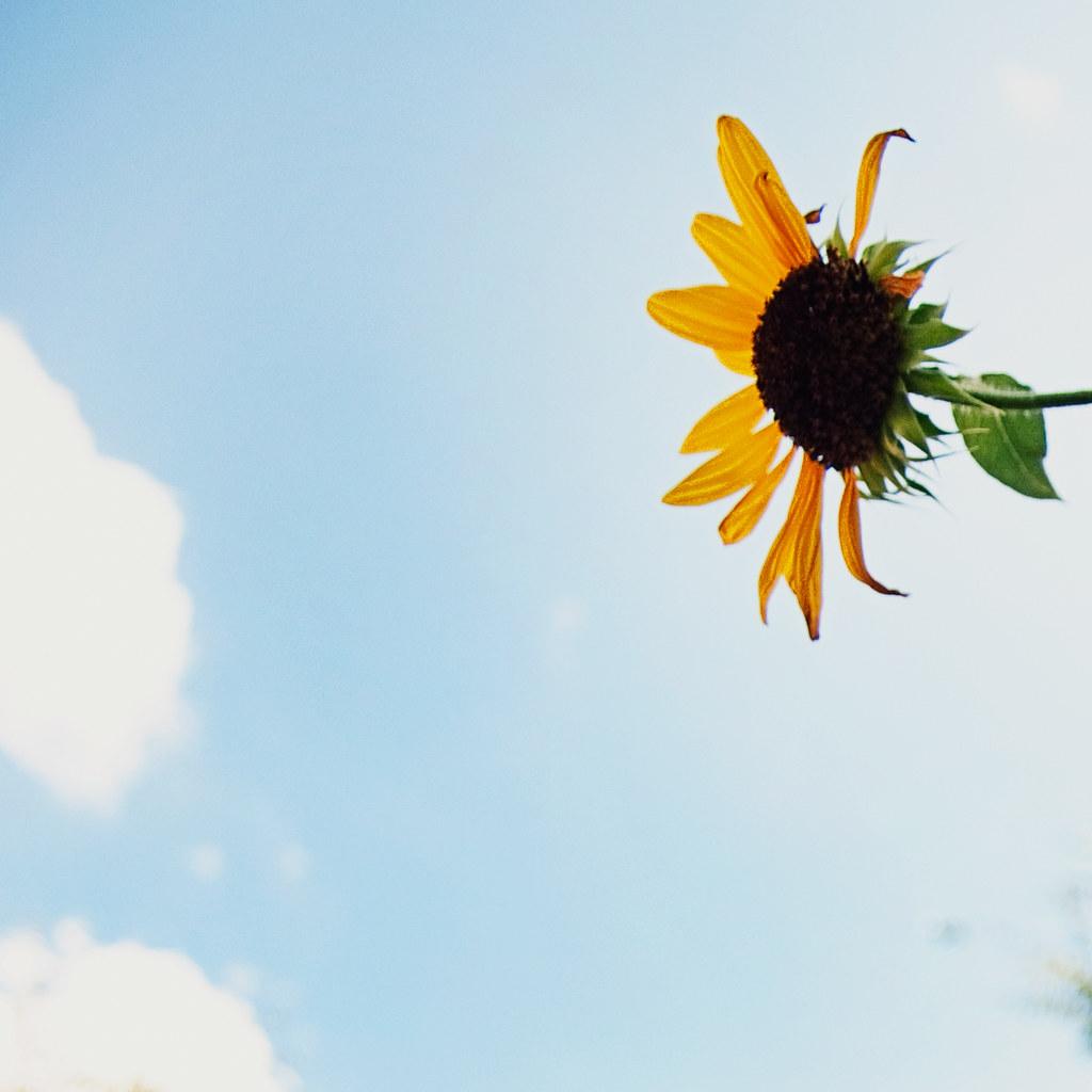 sqflower