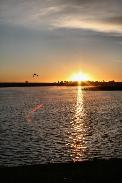 Duck flies into the sunrise.