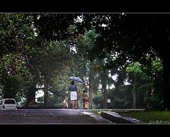 Under the umbrella of love (Sh@dows) Tags: rain umbrella canon shadows father daughter kerala monsoon 7d raining thrissur shdows sarin walkingintherain canonef24105mmf4isl ef24105mmf4isl rainshot sarinsoman keralarain thekkinkaadu canon7d vadakumnathan nizhal