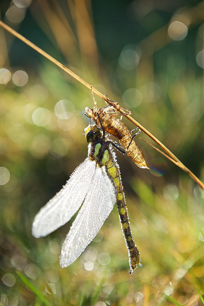 Jialuo Hu Dragon Fly