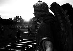 Angel ym mhelydrau olaf yr haul (Rhisiart Hincks) Tags: aingeru angel ael aberystwyth ceredigion mynwent cemetery kanposantu hilerri cladh bered kembra wales cymru kembre gales galles 威爾斯 威尔士 wallis uels kimrio valbretland 웨일즈 велс gallas walia เวลส์ gravestone hilarri maenbez graveyard grave bedd bez hilobi uaigh machlud auringonlasku kuzhheol ilunsenti solpor सूर्यास्त tramonto sonnenuntergang napnyugta solnedgång ue eu ewrop europe eòrpa europa aneoraip a'chuimrigh anbhreatainbheag silhouette blancinegre silwét duagwyn cysgodlun gwennhadu ledskeud dubhagusgeal sgàilriochd dubhagusbán sgàildhealbh blackandwhite scáthchruth bw zilueta zuribeltz blancetnoir blackwhite monochrome