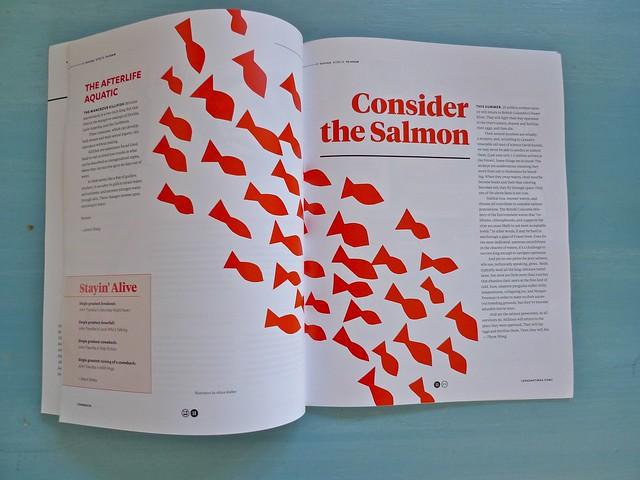 My fish illustrations