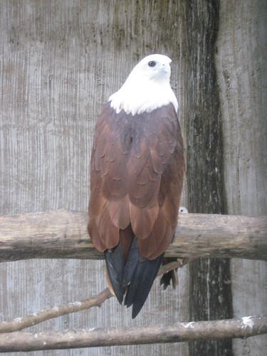 Eagle-eyed.