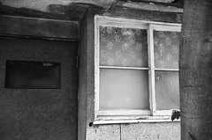 rose window (noji-ichi) Tags: old light shadow bw house film rose japan tokyo ikebukuro 日本 nostalgic 東京 窓 家 光 昭和 池袋 ばら フィルム