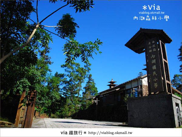 【溪頭一日遊】森林中的夢幻校園~內湖森林小學2