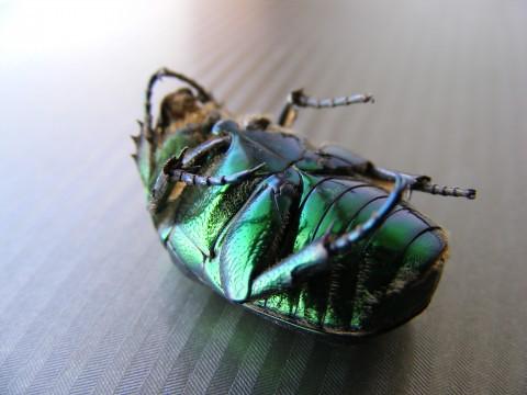 Dead-Bug_43215-480x360