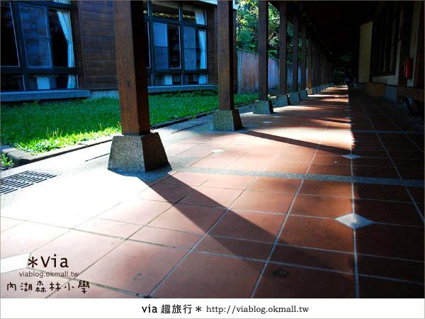 【溪頭一日遊】森林中的夢幻校園~內湖森林小學23