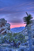 Another Joshua Tree Sunset (GMills31) Tags: california sunset clouds joshuatree redrock hdr mojavedesert joshuatreenationalpark cs4 photomatixpro topazlabs mountainhighworkshops