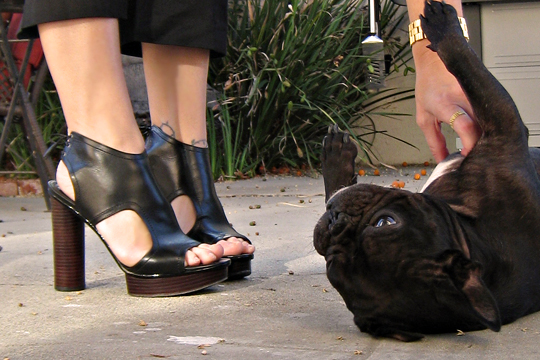 pour la victoire shoes+french bulldog+photo