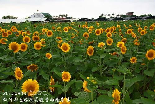 桃園觀音向陽農場20100918-080