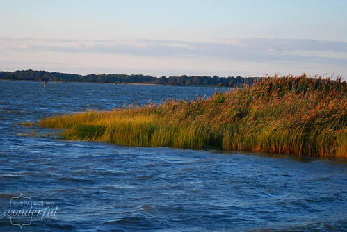 Reeds Grasses in Water