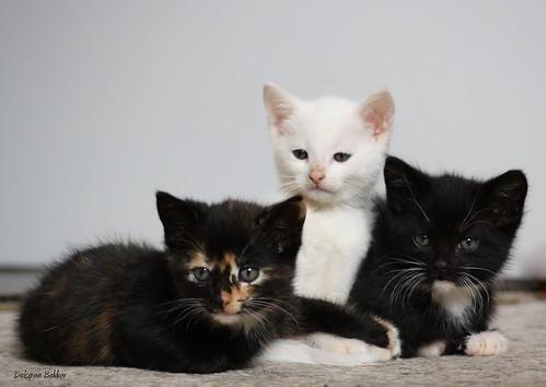 Kittens!