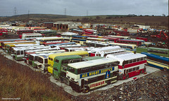 Barnsley's bus scrapyards, 1994 (Lady Wulfrun) Tags: carlton 1994 barnsley pvs scrapyards 14494