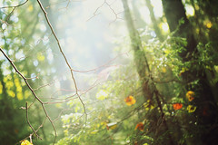 Early morning in the fall forest (LikClick Photography) Tags: trees plants fall nature fog forest earlymorning fallenleaves yellowleaves walkinginforest