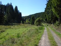 Weg von Reinsfeld zum Saar-Hunsrück-Steig