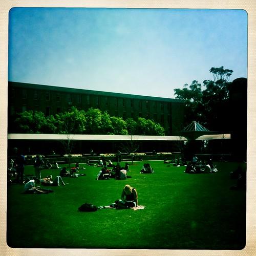 Libary lawn