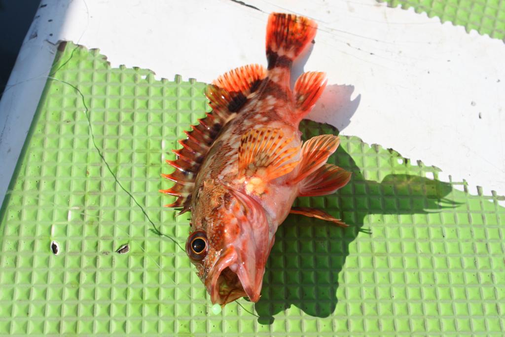 A Diary of Fishing-Kanazawa Hakkei (8)