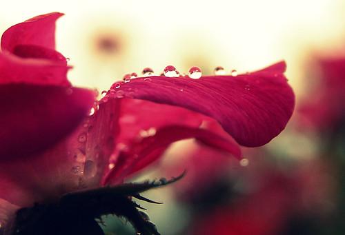 Raindrop Relief