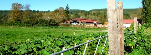 Fall City Farm