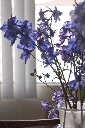 delphiniums, glass