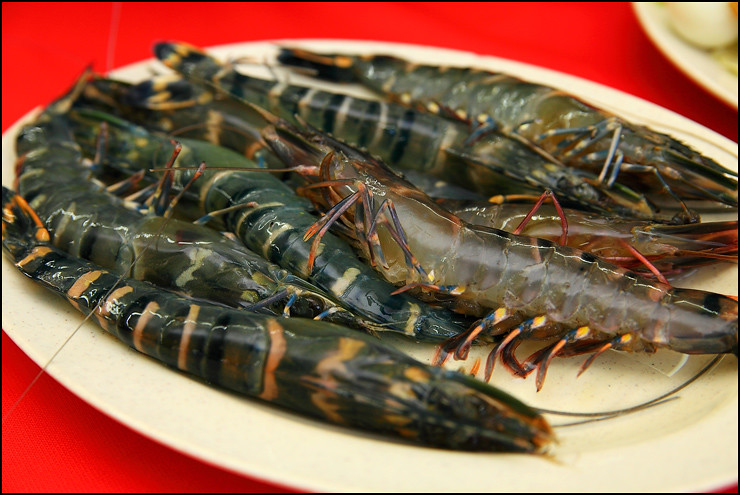 fresh-tiger-prawns