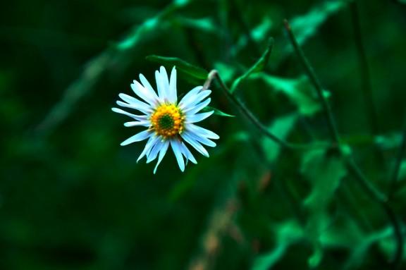 Jiuzhaigou flower11