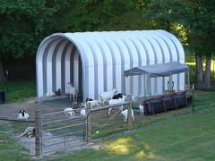 SteelMaster Steel Goat Shelter