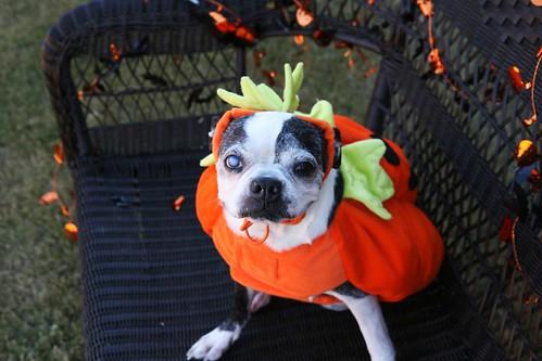 Paisley May Pumpkin Head