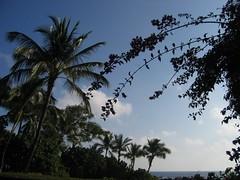 Makena Cove Palms (stu_macgoo) Tags: hawaii scenery maui makena makenacove