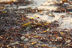 (Digital_trance) Tags: autumn leaves canon taiwan  lanscape