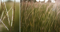(Laura D-) Tags: pictures 2 sun macro field grass day rainy depth photoj