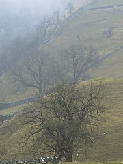 Misty Malham 2 (1963chris) Tags: trees england mist misty landscape countryside raw sony yorkshire hillside northyorkshire malham malhamcove