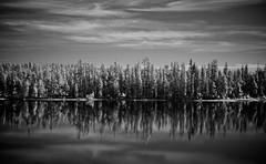 Aspens (Steve Lavelle) Tags: trees lake reflections landscape mono nikon infrared aspens wyoming grandteton d300