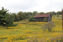 IMG_5439 (chicabrandita) Tags: flowers newyork fall barn ithaca fingerlakes 2010