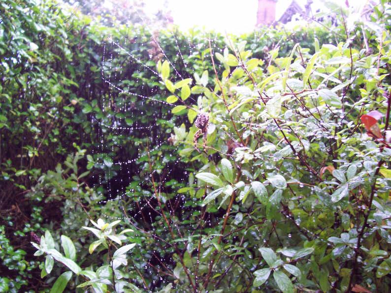 garden_spider_web