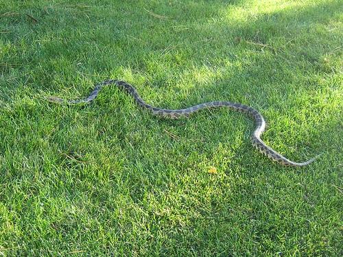 Backyard Visitor - 2