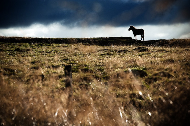 Herd_In_Iceland-20480
